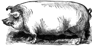 Fat_Hog