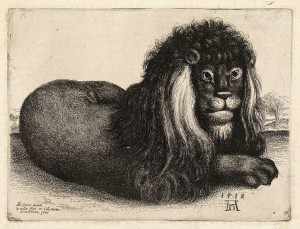 lion looking mournful