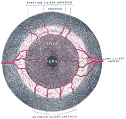 gray's anatomy eye
