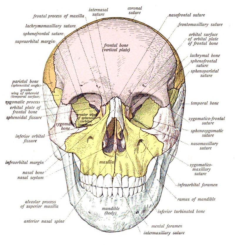 A saw head - Thomas Morris
