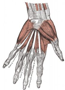 diagram of hand