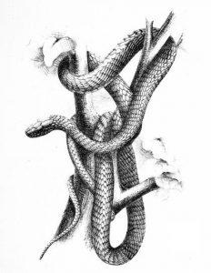 tree snake
