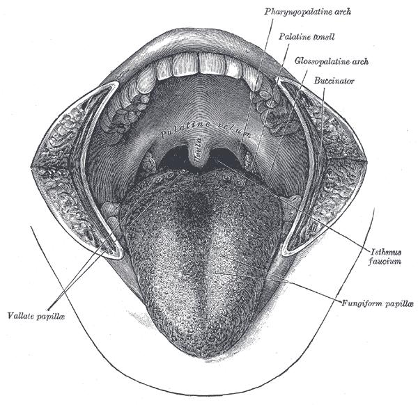 Grays throat