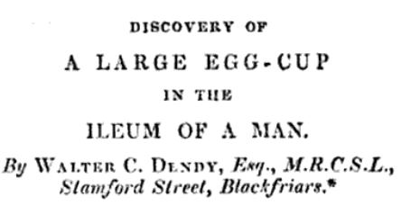Discovery of a large egg-cup