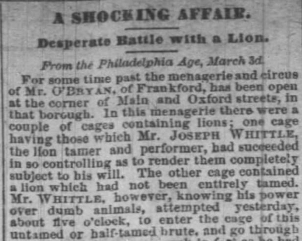 Shocking affair with lion