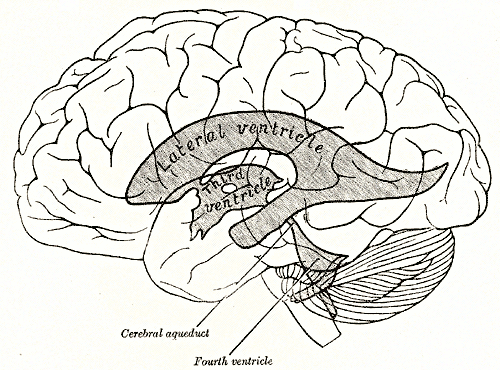 ventricles of brain