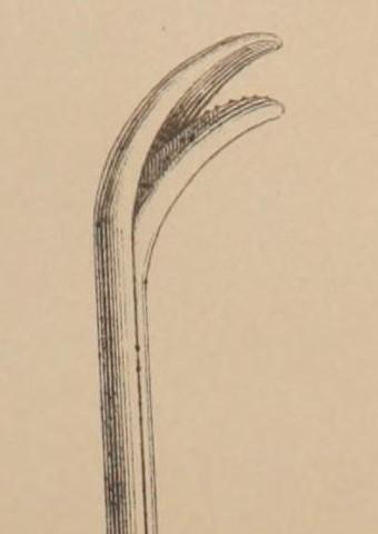 duckbill lithotrite