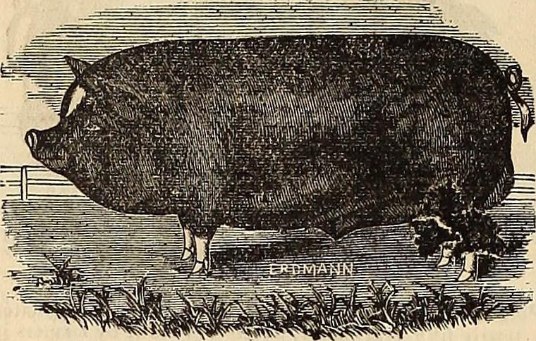A dismal tail