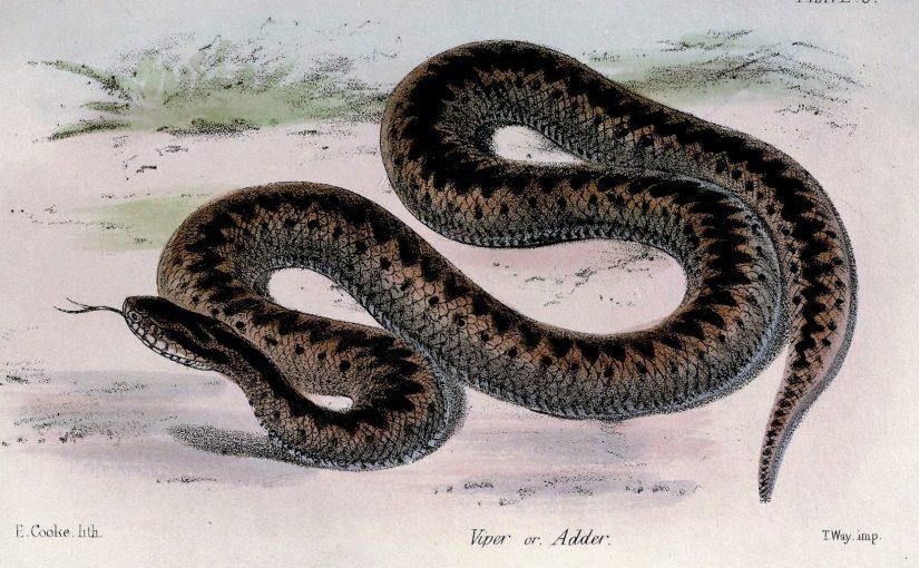 He swallowed a serpent